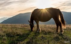 horse - the sunset at Sibillini mountains