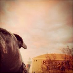 Bully watching over the Junction. Mississippi State University.