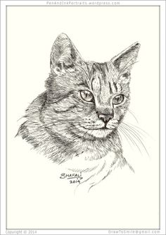 Portrait of Short-haired tabby cat done in pen and ink - Custom Portrait Commissions of Pets by Shafali - Animal drawings, Sketches, Wildlife art, Artworks etc. in black and white.