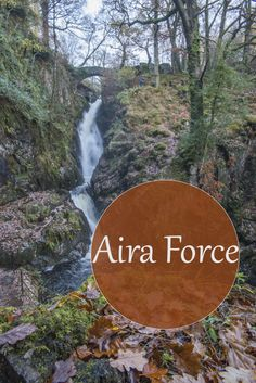 Aira Force with kids & a sprinkling of snow - Journey of a Nomadic Family Spotted Woodpecker, Local Hotels, Free Cars, Picnic Area, Cumbria, Autumn Trees, Lake District, More Photos