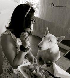 bull terrier dammi un biscotto ti pregoo