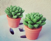 Cactus Soap Set $6.00