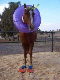 It's a sea horse.