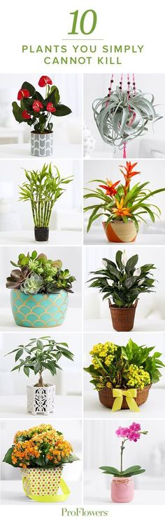 You may not have a green thumb…but you can certainly look like you do! Check out this list of 10 plants you can't kill!