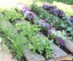 Uma horta com divisórias entre as espécies é ideal para não deixar plantas invasoras se desenvolverem, uma vez que não deixa a luz incidir onde estão colocadas as ripas de madeira.