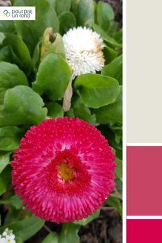 Palette gris, mauve et framboise. Trouve la palette de couleurs idéale pour ta marque à l'aide de ce tutoriel pas à pas. Aide, Cactus, Inspiration, Color, Gray, Raspberry, Colors, Biblical Inspiration, Cactus Plants