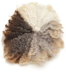 Spinning wool from rare breed sheep. I miss the feel of raw wool and the smell. Yes, it smells like a sheep, but if it is clean, that's a good smell, not a barn poo pile smell.