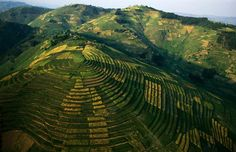 Terraced crops, Rwanda Aerial Photography