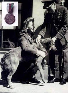 Paradog Bing receives his medal. Liverpool man trained #dogs to parachute into Normandy for D-Day landings