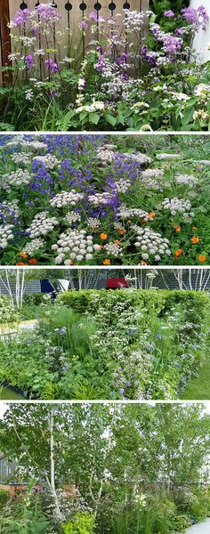 Cow parsley and umbellifers - perfect for relaxed planting schemes