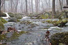 1200px- Near Princeton, New Jersey, USA...Herrontown_Woods_Arboretum_brook