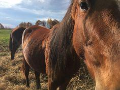 Von Doeler Ranch, North Bay, Ontario, CA Ontario, Ranch, Horses, Animals, Guest Ranch, Animales, Animaux, Animal, Animais