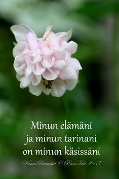 voimakortti Minun elämäni ja minun tarinani on minun käsissäni - akileija voimapuutarhassa Affirmation Cards, Spiritual Path, Affirmations, Motivational Quotes, Life Quotes, Words, Ideas, Spirituality, Quotes About Life