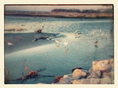 seagulls | M(a)y Planet