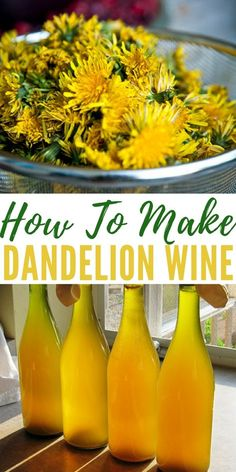 How To Make Dandelion Wine - Dandelions are weeds that grow pretty much anywhere, for years I always thought of them as annoying weeds that just grew where ever they liked, ruining my lush green lawn. now I am a prepper, I have changed my mind. Homemade Wine Recipes, Canning Recipes, Vegan Recipes, Homemade Spices, Avocado Recipes, Dandelion Wine, Dandelion Jelly, Dandelion Recipes, Dandelion Jam Recipe