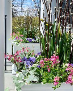 """96 """"Μου αρέσει!"""", 5 σχόλια - Susan Nock (@sngardendesign) στο Instagram: """"Flower planting on a sunny day - hopefully spreading a little cheer.... . . . #springflowers…"""" Plants, Instagram, Plant, Planets"""