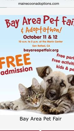 San Rafael, CA, 10/11&12, 2014. Come visit Maine Coon Adoptions and our adoptable kitties at the Bay Area Pet Fair & Adoptathon this weekend! We will be in Booth #404 from 10-2 both days. This event is the largest gathering of adoptable animals in Northern California. Lots of fun family activities, too, and parking and admission are free!