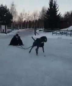 Jerk dog lightens his load
