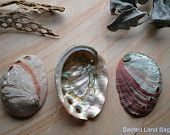 Pacific Abalone Shell- 1 Sml Ocean Blessings, Native Altar, Offering Bowl, Boho Home Decor, Pearl-Rose-Green-Peach. Sacred Garden, Pearl Rose, Wood Resin, Abalone Shell, Altar, Nativity, Shells, Meditation, Peach
