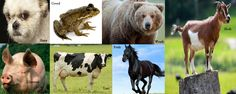 Animals per Sin; pig for Gluttony (similar traits as sin, fat, sloppy...), horse for pride (head up high, confident), bear for wrath (violent, cause harm), a dog for envy (loves attention, easily jealous if something else was having more attention, dogs fight to be alpha male due to envy), frog for greed (frogs are ugly like greed, also greedy for living in water and land), cow for lust, (lust's symbol is a bull which is similar to a cow but a cow is more lovable), goat for sloth, a lazy…