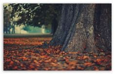 beautiful tree with leaves tattos  | tree trunk 3 t2 tree trunk autumn