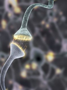 Firing Synapses (Dr Jon Heras). Computer artwork of nerve cells (neurons) forming a neural network. Neurons are responsible for passing info...