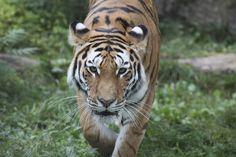 Zoo de Granby Le Zoo, Voici, Canada, Zoological Garden, Hobbies, Animaux