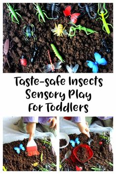Insect sensory bin for toddlers taste safe. A fun sensory play activity great for toddlers and preschoolers. Toddler Activities, toddler activity by dianne Toddler Sensory Bins, Sensory Activities Toddlers, Toddler Play, Spring Activities, Toddler Learning, Toddler Preschool, Toddler Crafts, Parenting Toddlers, Family Activities