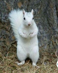 Gorgeous white squirrel