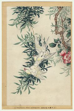 White-swallow, Willow, and Hedge-rose by Nakayama Sugakudo (active circa 1850 - 1860)