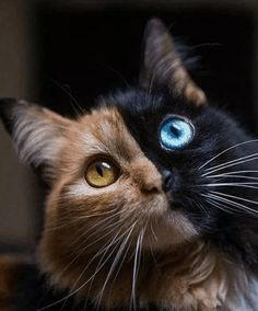 46 Ideas funny animals cats eyes for 2019 Baby Animals Super Cute, Cute Baby Cats, Cute Little Animals, Cute Cats And Kittens, Cute Funny Animals, Kittens Cutest, Funny Cats, Baby Animals Pictures, Cute Animal Photos