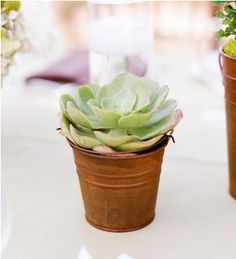 Succulents are becoming a 2012 trend for weddings... #Weddings #WeddingDecorations