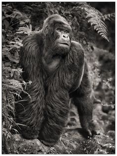 Nick Brandt – The beauty of East Africa and black and white photography