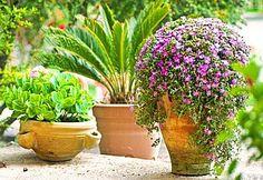Mediterraner Garten - worauf Sie bei der Gartengestaltung achten bei Mein Garten