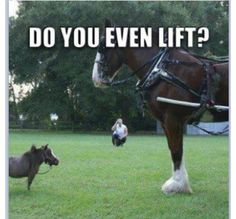 Funny horse ;)