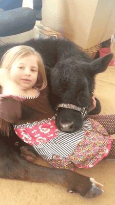 animated animals pet cow