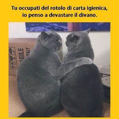 Vita da gatti