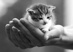Teeny tiny kitten in the palm of your hand…….