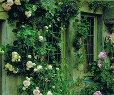 garden rose trellis