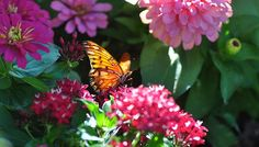 Tips for attracting bees and butterflies to your garden.