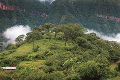 Yungas, el lado verde de Jujuy