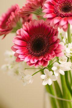 Scripture Quotes, Bible Verses, Scriptures, Flower Wall, My Flower, 1 Peter 3, Bible News, Beautiful Bouquet Of Flowers, My Fairy Garden