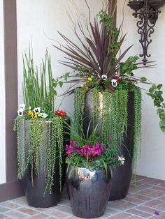 Mix Succulents & Perennials in different sized container planters Agave, Red Sensation Cordyline, String of Pearls Succulents, Horsetail Reeds & Pansies.