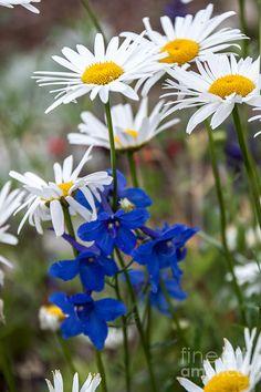 Colorado Wildflowers 1 Photograph  - Colorado Wildflowers 1 Fine Art Print