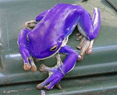 My grandson would love this frog.
