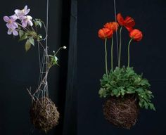 Suspended String Greenery - These Fedor Van Der Valk String Gardens Make Planting Pots Obsolete (GALLERY)