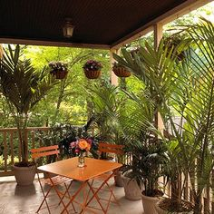 Potted palm walls. Imagine this extended out for a larger area. The outdoors in and the indoors out. Beautiful privacy.
