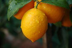 7 Ways to Clean with Lemon | The Creative Mama | Rachael Cherry