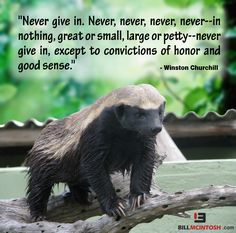 Fight against Parkinson's, Don't Quit: NEVER give up! Great Quotes, Quotes To Live By, Me Quotes, Motivational Quotes, Inspirational Quotes, Honey Badger, Good Advice, Never Give Up, Inspire Me