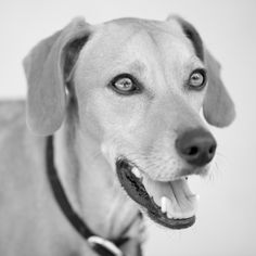 Gus the rescue dog © Garon Kiesel-Pixel Vault Photography